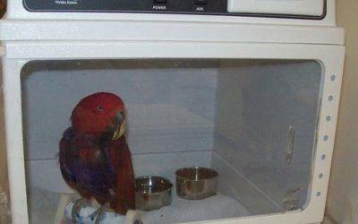 Votre perroquet semble malade…