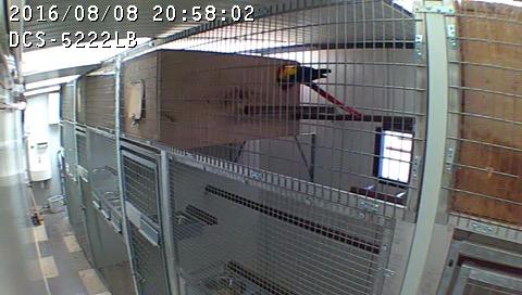 Surveillance couloir_2